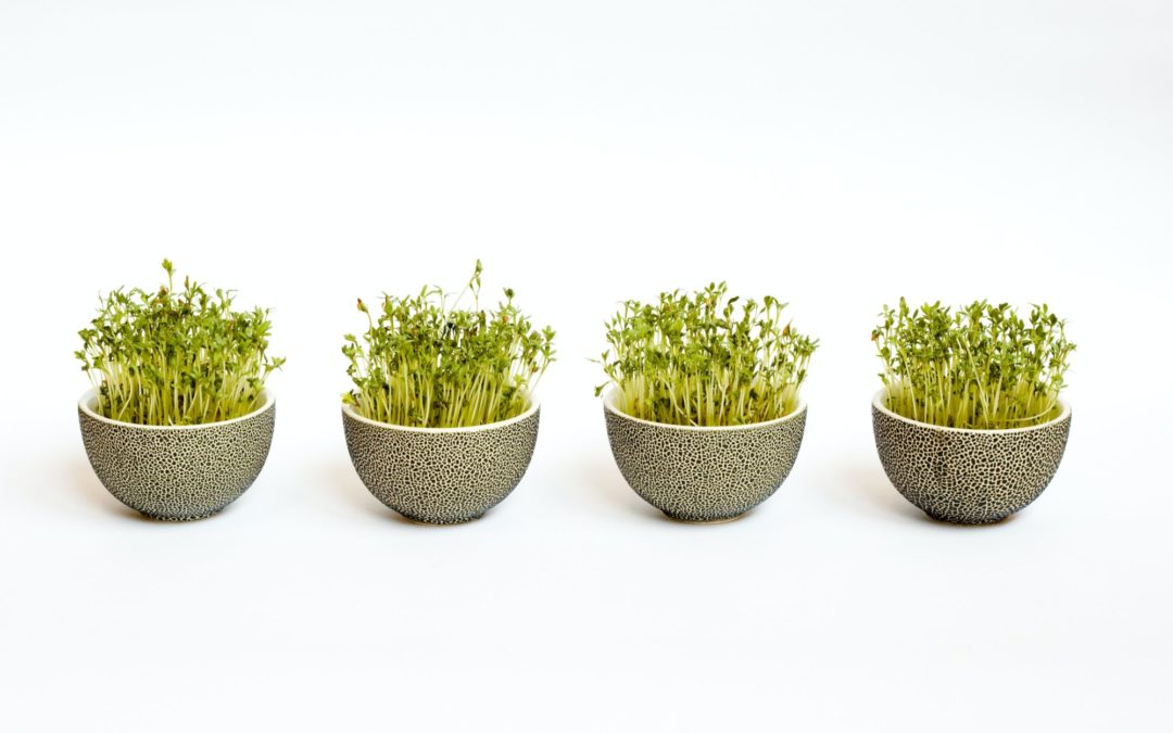 The Powerful Immune Properties of Broccoli Sprouts
